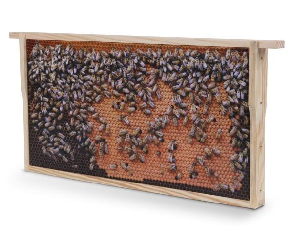 Bienenwaben-Bild: Dunkle Brutwabe, Rahmen neu