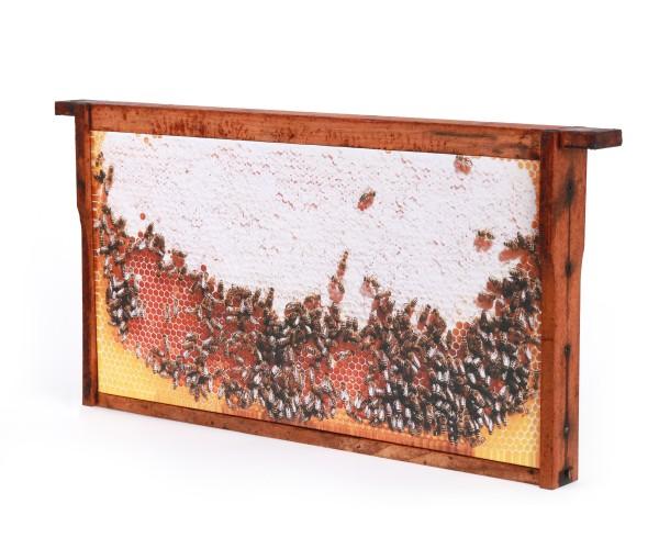 Bienenwaben-Bild: Honigwabe voll, Rahmen shabby