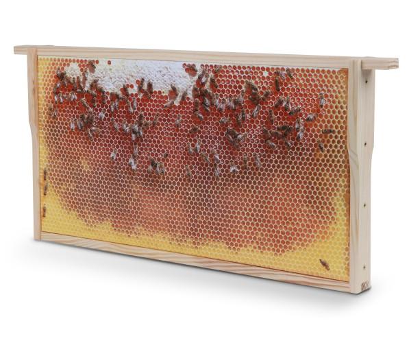 Bienenwaben-Bild: Honigwabe leer, Rahmen neu