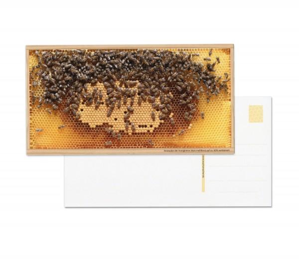 Postkarten: Motiv Bienen-Brutwabe hell (5 Stück)