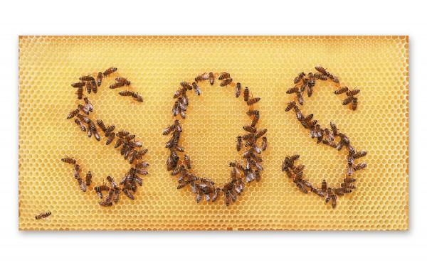 Poster, Motiv: Honigwabe mit Bienen-SOS