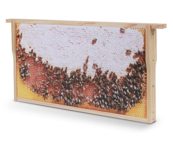 Bienenwaben-Bild: Honigwabe voll, Rahmen neu