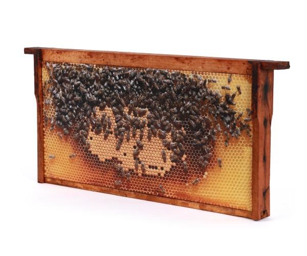 Bienenwaben-Bild: Helle Brutwabe, Rahmen shabby